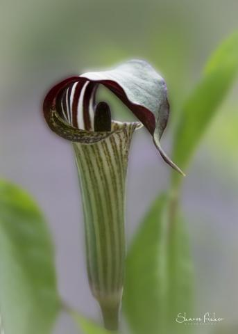 picture of Jack in Pulpit